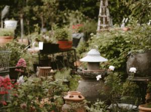 Rejsegilde » planter til haven