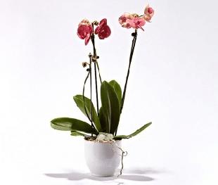 Planter som gave med posten