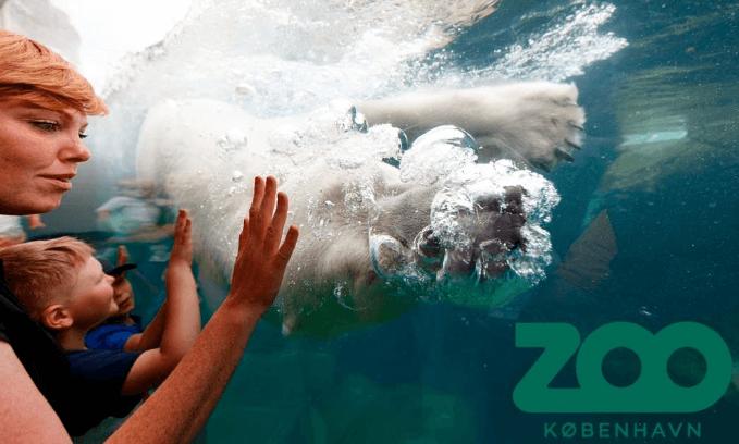 Gave til nybagt mor » gavekort til zoo nybagt mor