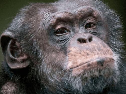 Gaver til 12 årige » zoologisk have 12 aarig gave