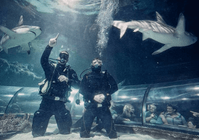 Oplevelser for 2 » Big Shart Dive i kattegatcentret oplevelse for 2