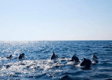 Oplevelsesgaver » hvalsafari oplevelsesgave