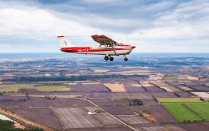 50 års fødselsdag » pilot for en dag 50 års
