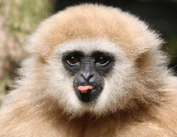 Afskedsgaver » Dyrepasser for en dag hos Skaerup Zoo afskedsgave