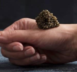 Gave til svigermor » Deluxe vin caviarsmagning paa Stokkebye vingaard